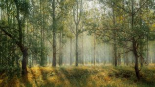 green_forest