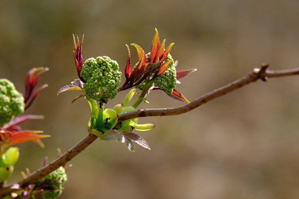 Tree_blossoms